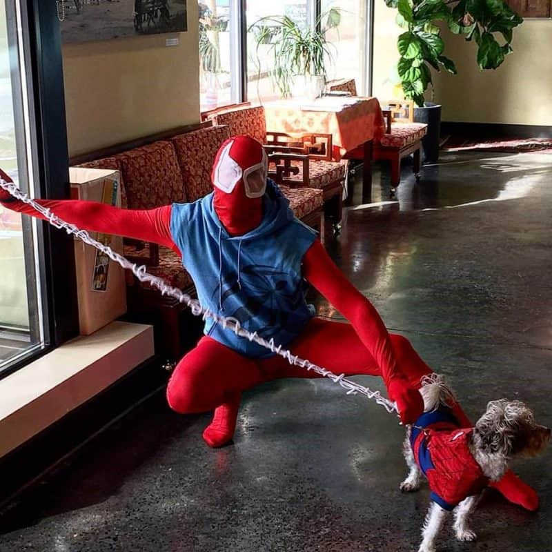 Spider Man Rules