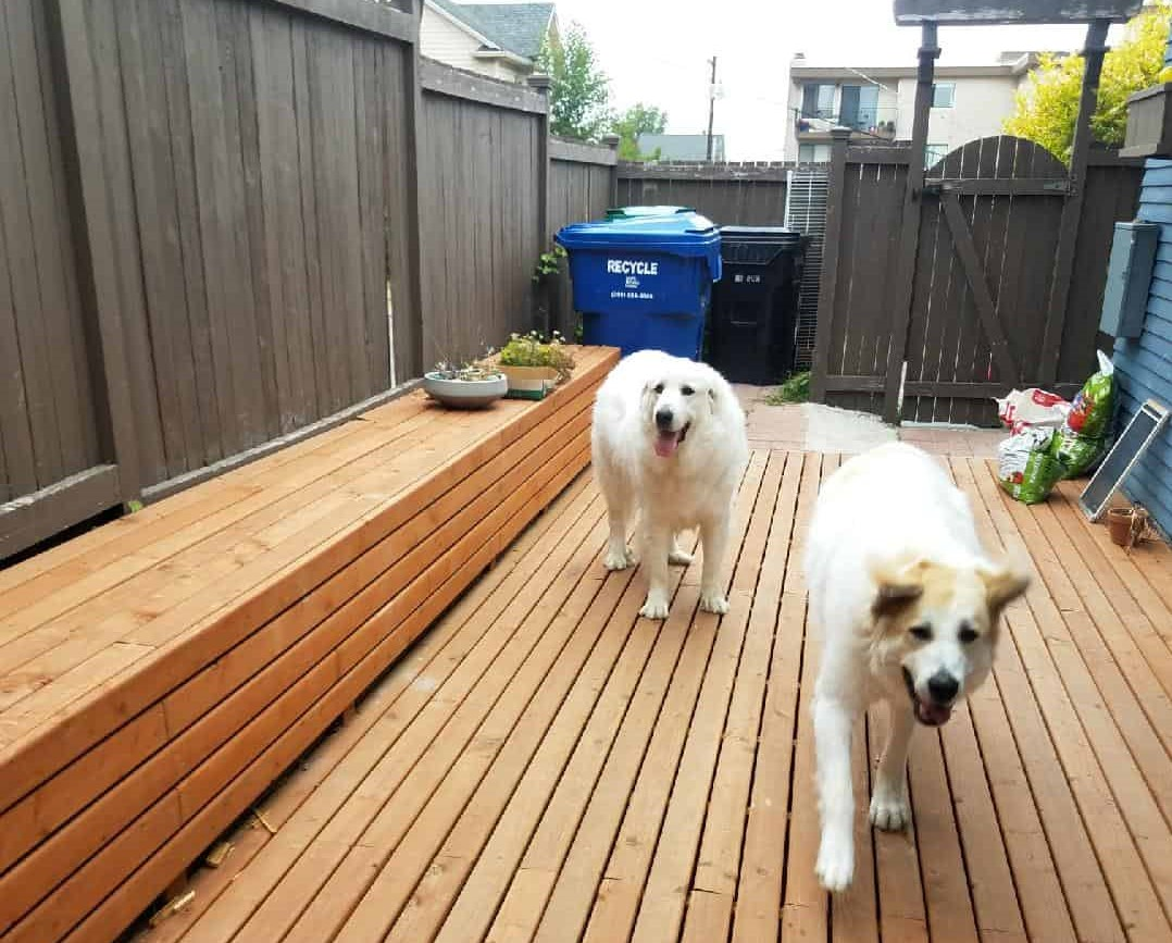 Our Phinney Ridge Neighborhood dogs